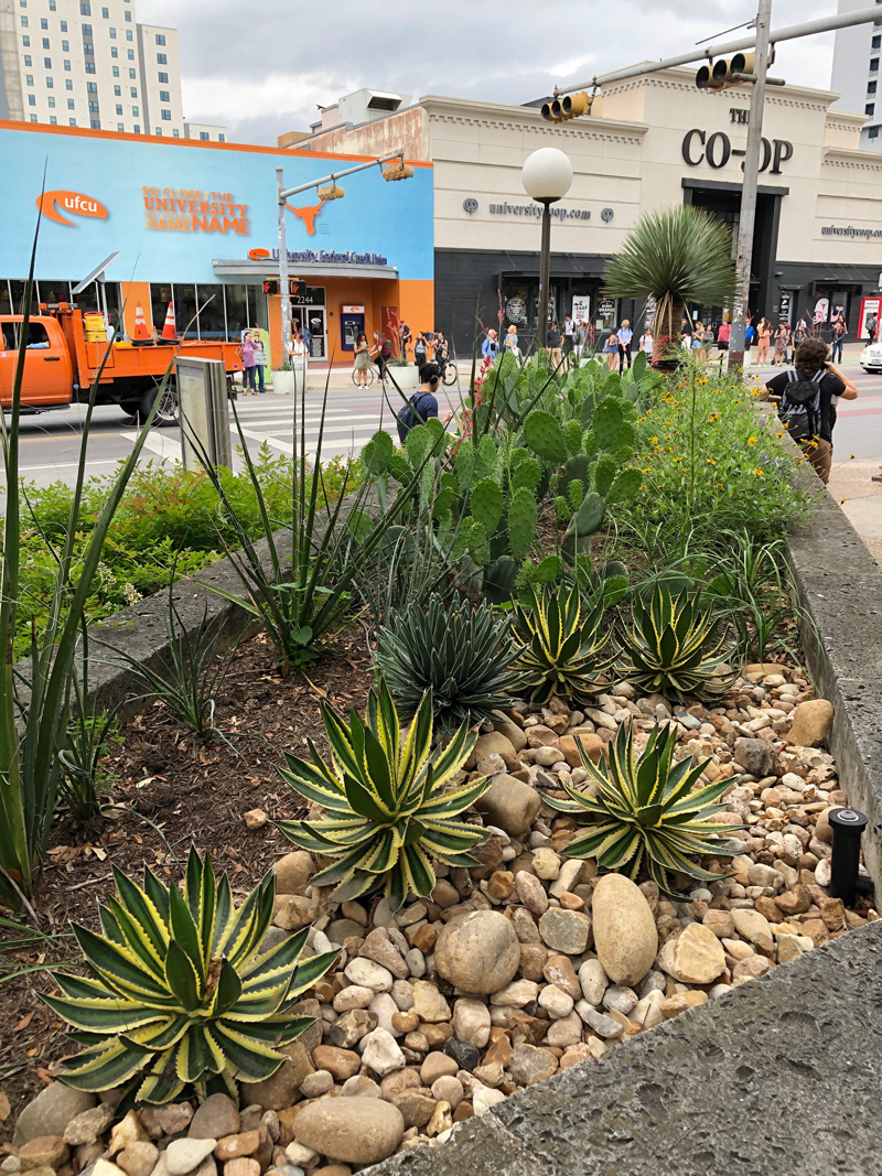 Planting area on Guadalupe Street showing selected plants from the greenhouse