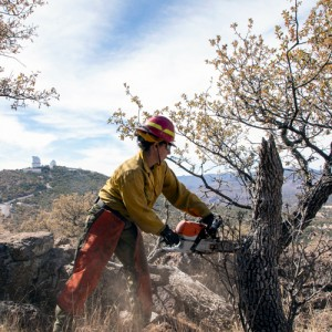 Cutting trees at McDonald Observatory