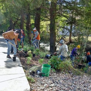 UT Landscape Services team and staff team up to for Texas Arbor Day 2019